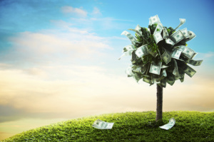 concept, money tree on grass