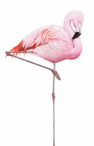 Flamingo_Web_