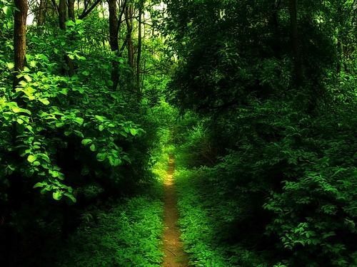 any book or bible can only Narrow Path Bible